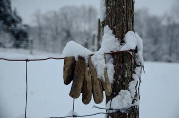 forgotten glove