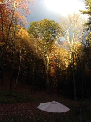daybreak over trees and umbrella
