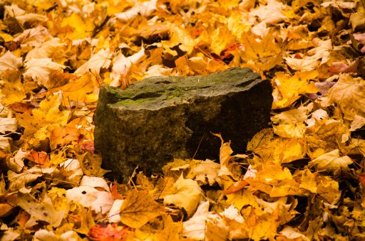 stone in leaves b