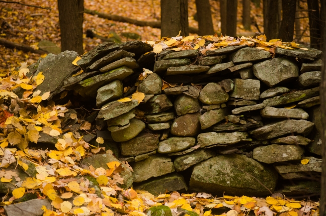 yellow leaves stone wall 2