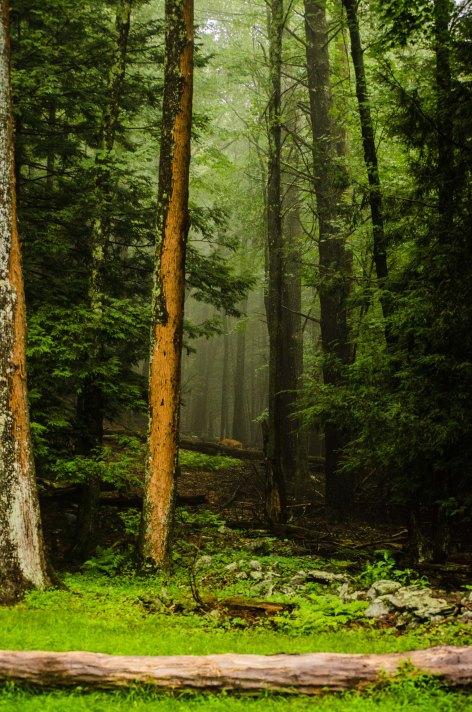 forest mist slice